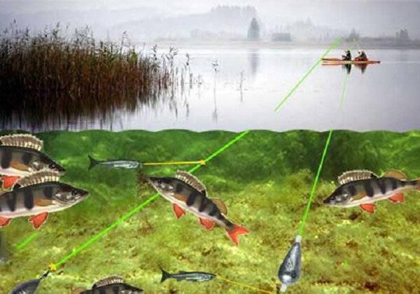 Как ловить окуня: снасти, ловля на живца, спиннинг, фидер, ловля зимой