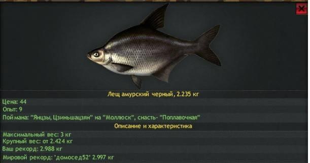 Лещ: описание рыбы, места обитания и повадки