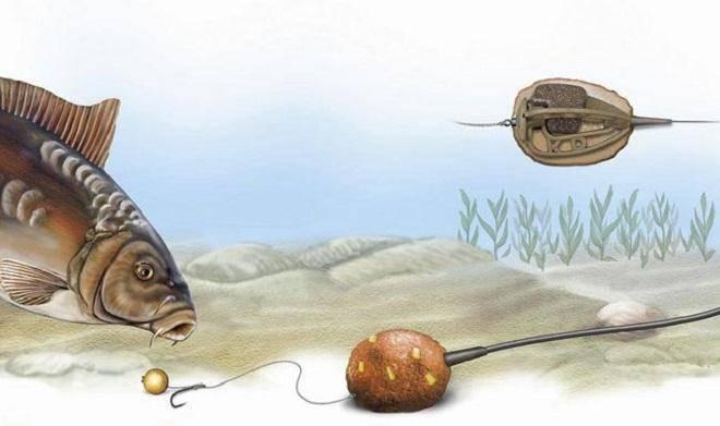 Как ловить карпа на кружки и подготовить оснастку