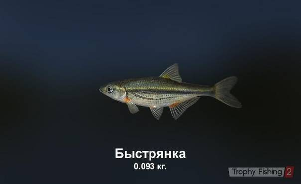 Быстрянка (alburnoides bipunctatus)