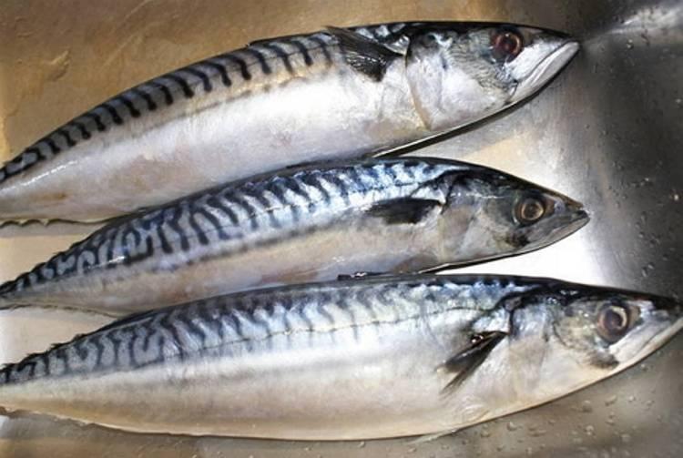 Рыба макрель: почему она так похожа на скумбрию и чем отличается