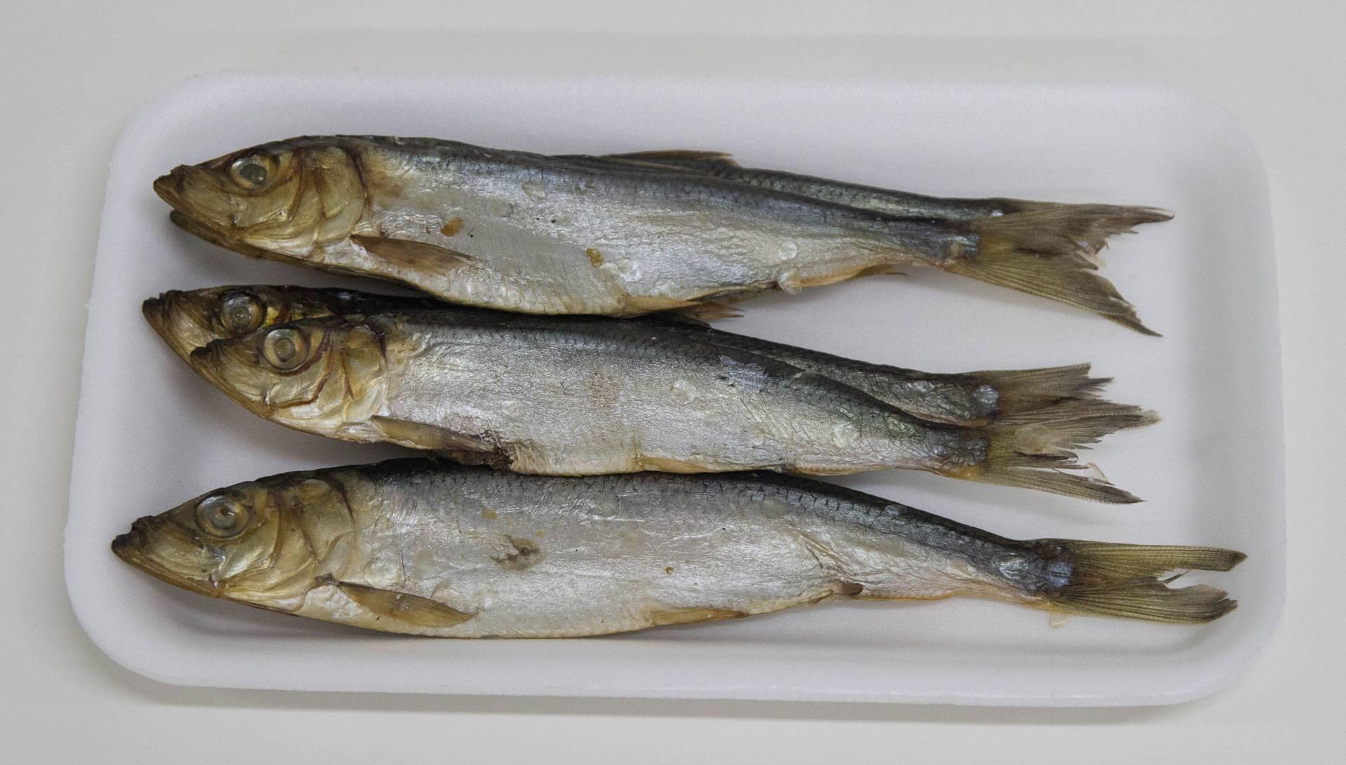Салака (рыба): польза и вред