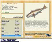 Умбра — описание рыбы, ее повадок и способов современной ловли (видео и 70 фото)