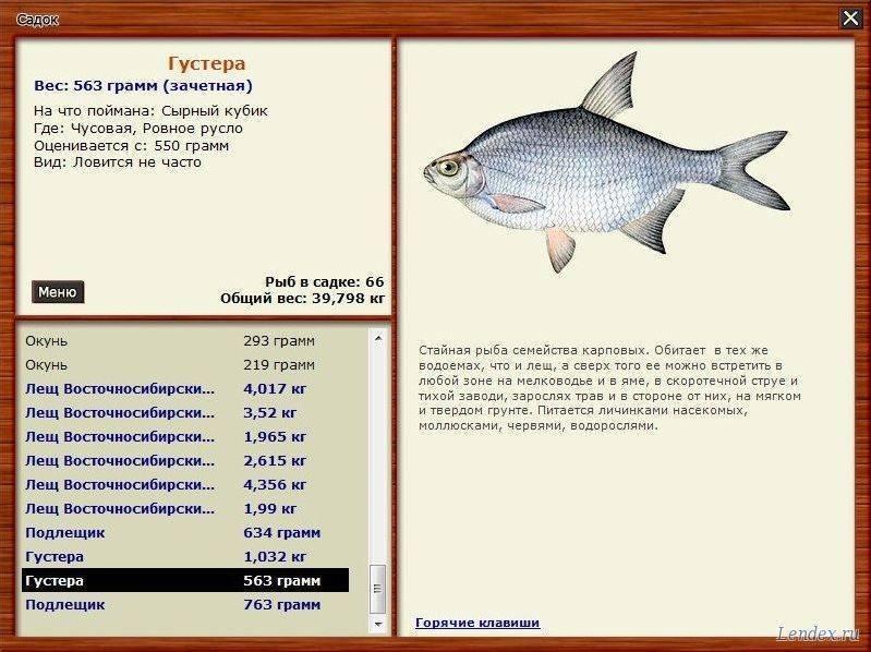 Ловля густеры - читайте на сatcher.fish