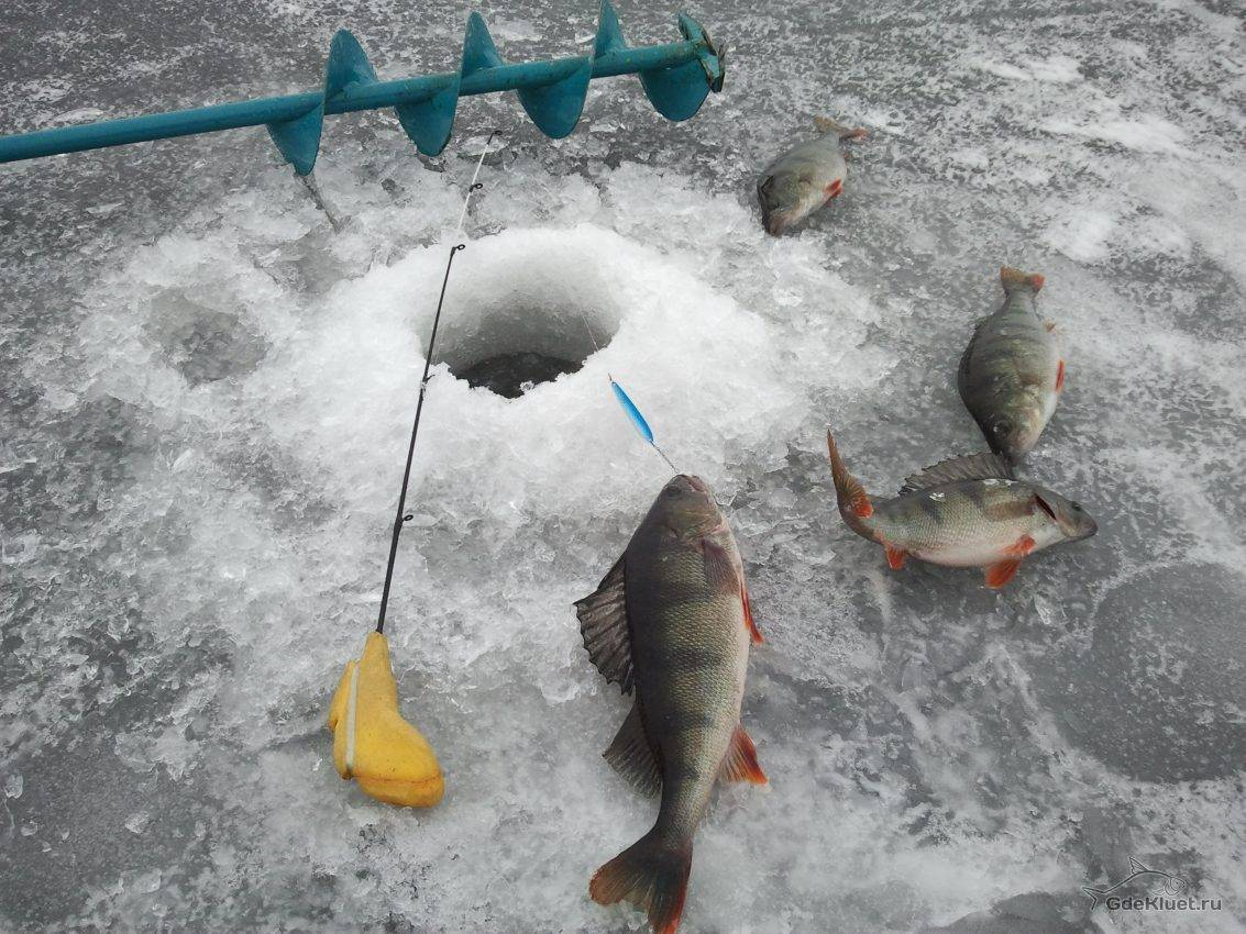 Техника ловли окуня по первому льду