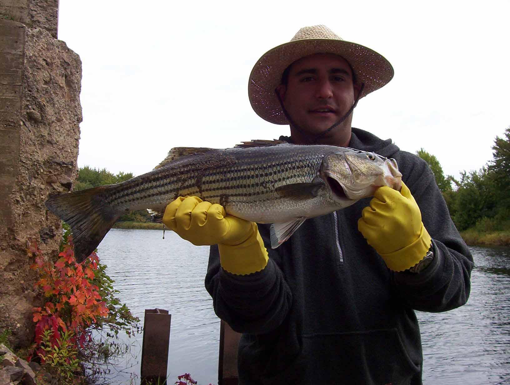 Лаврак - рыба-деликатес: описание, образ жизни, выращивание и рецепты приготовления
