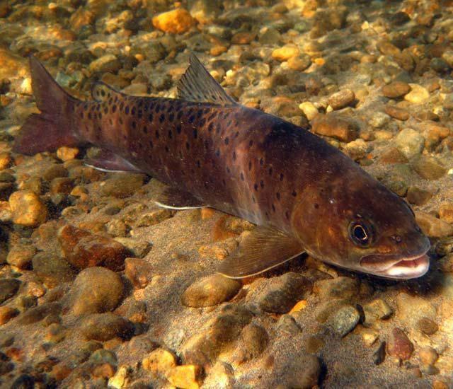 Рыбалка на лене. описание реки, фото и видео. какая рыба ловится?