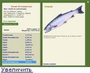 Рыба сырок фото и описание где водится