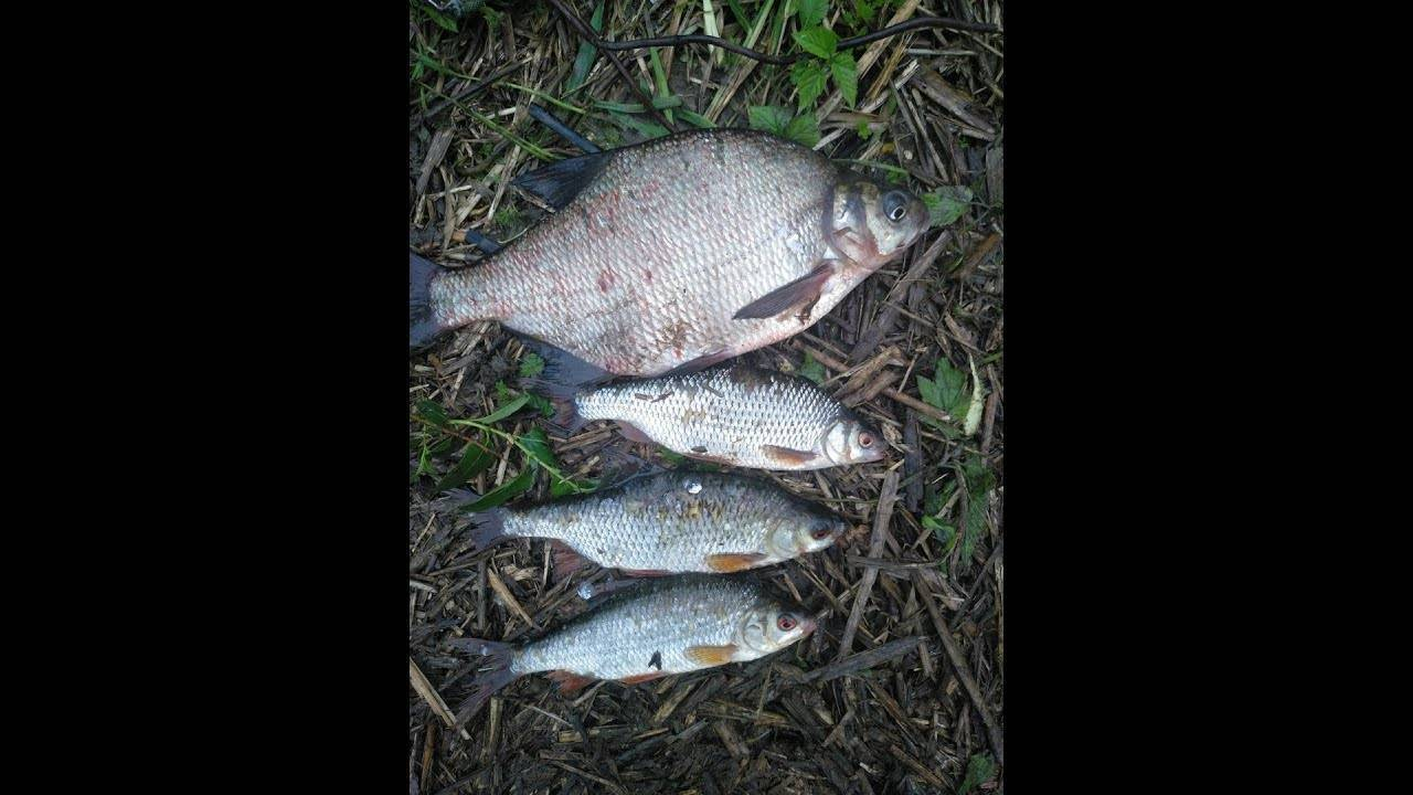 Ловля на пенопласт: особенности рыбалки, причины клева и детали подготовки снастей (80 фото + видео)