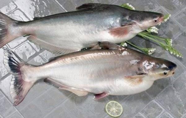 Макрурус что за рыба, как готовить