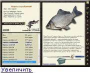 Как выглядит, где обитает и чем питается карась? :: syl.ru