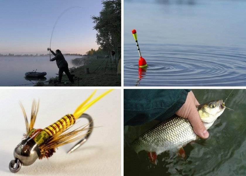 Ловля головля на спиннинг, поплавок. наживки, места обитания