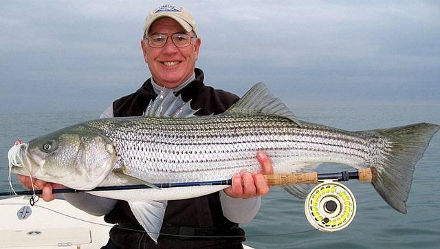 Обыкновенный лаврак: обитание, полезные свойства рыбы, ловля