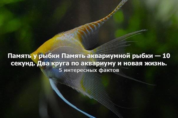 Есть ли память у рыб — мифы и реальность