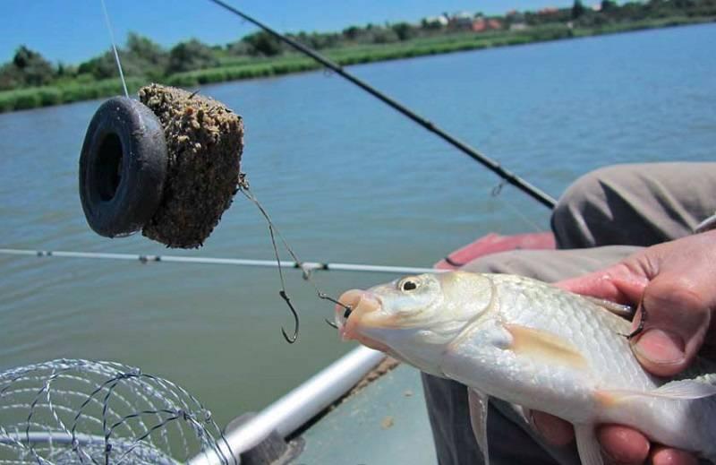Ловля карася осенью - наживка, место и тактика ловли - рыбачок!сайт рыбачок