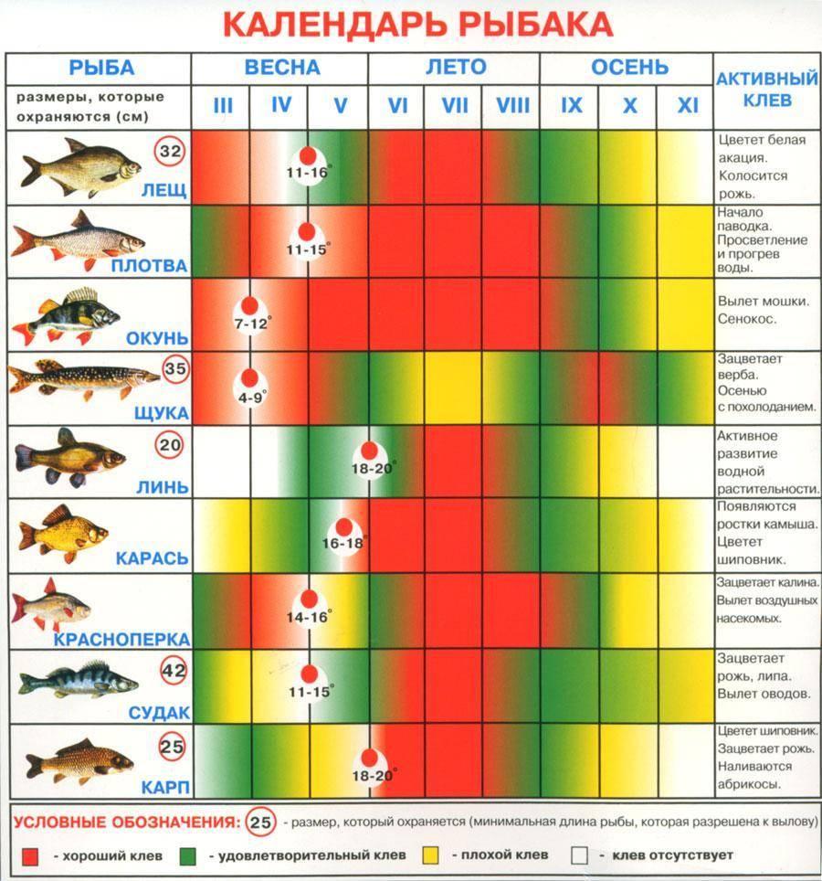 Нерест плотвы - особенности икрометания этой рыбы