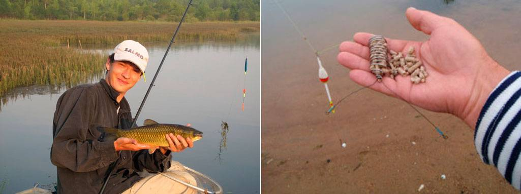 Рыбалка на белого амура фидером: снасть, наживки, прикормка