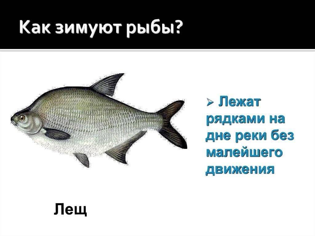 Зимняя рыбалка секреты и особенности ловли рыбы снасти, видео и фото.