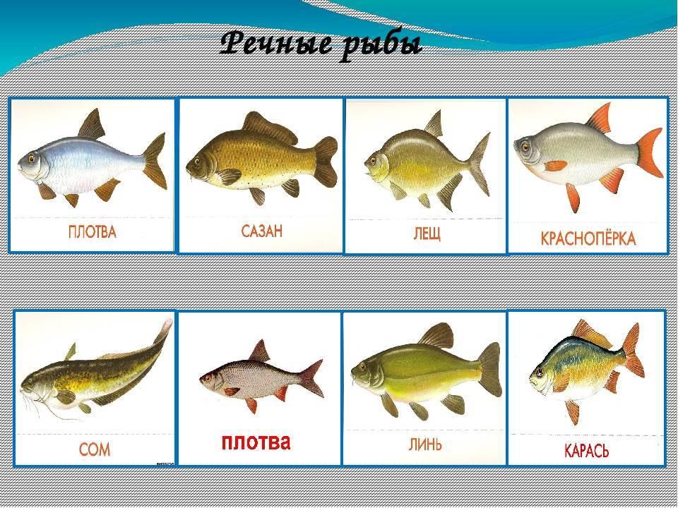Самые большие пресноводные рыбы в мире