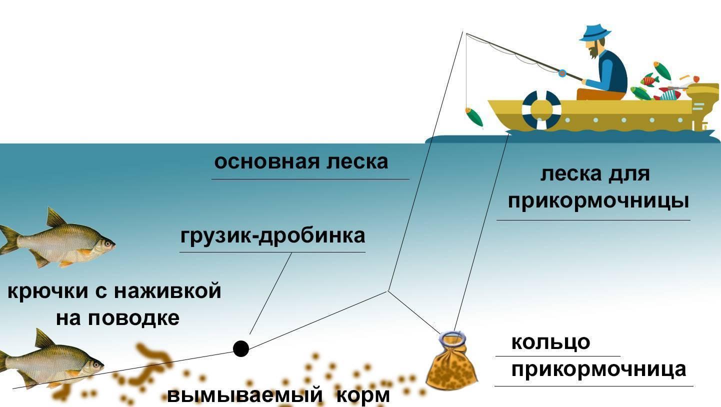 Особенности и правила ловли леща с лодки на кольцо