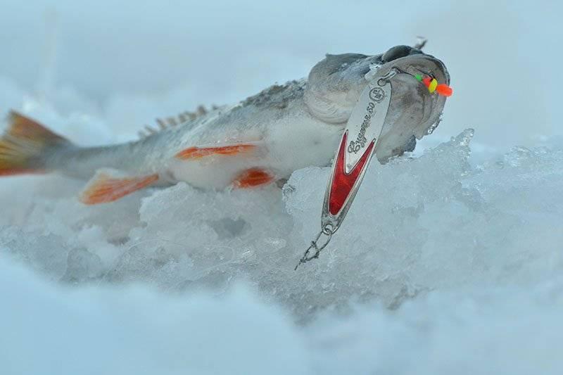 Ловля окуня зимой на блесны — топ 10