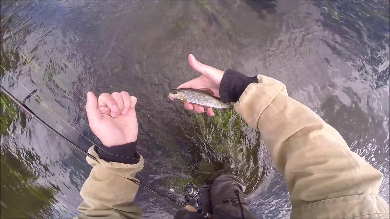 Ловля хариуса на поплавочную удочку