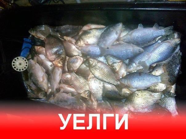 Озера челябинской области для рыбалки (уелги, алабуга, аракуль, иртяш и другие)