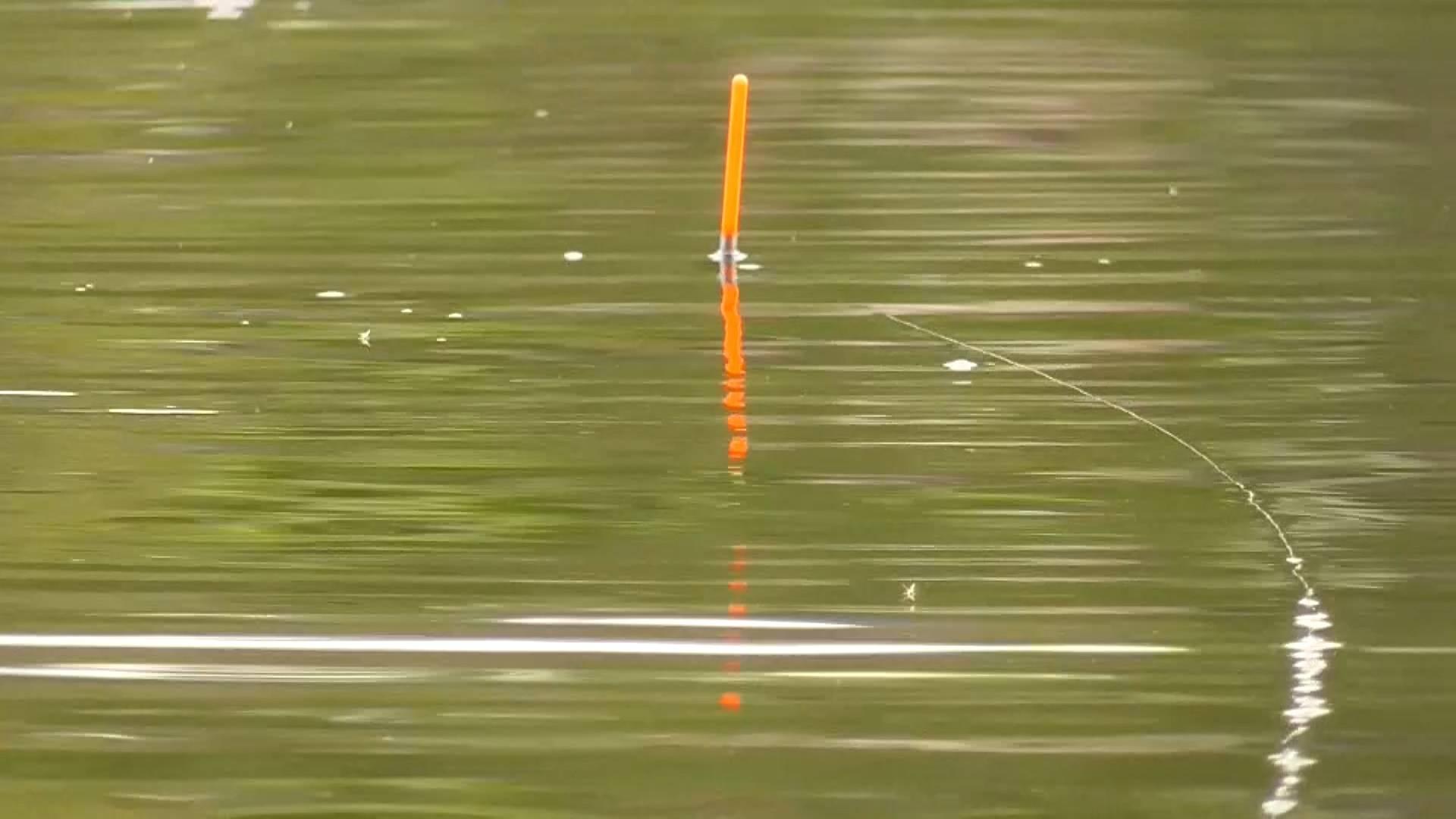 Ловля щуки и окуня на живца поплавочной удочкой