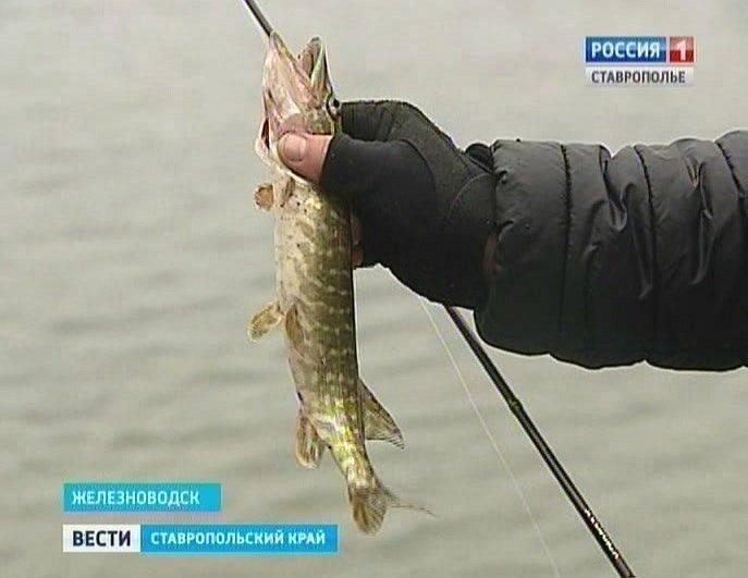 Рыбалка в ставропольском крае: отзывы, лучшие места для ловли в ставрополе