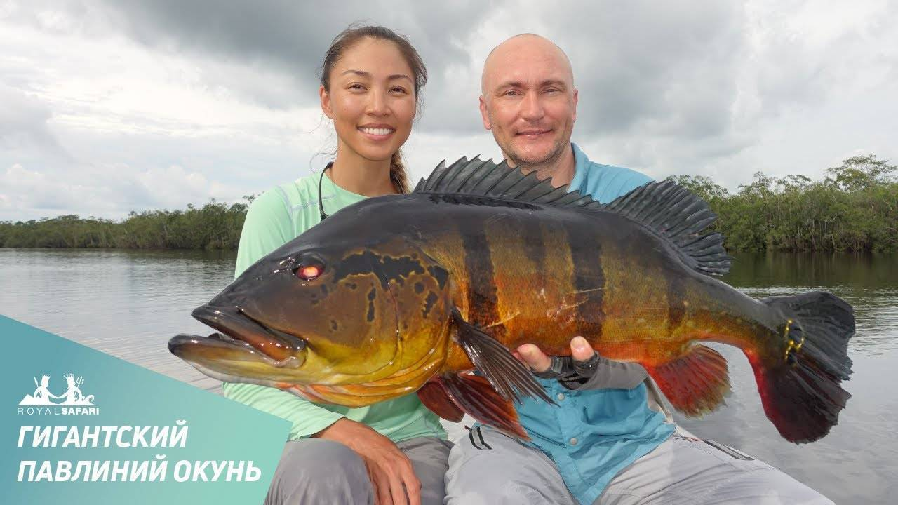 Семейство окуневых: список рыб, разновидности