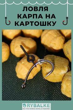 Картофель для ловли карпа