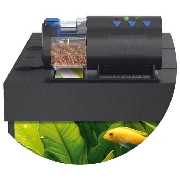 Ежедневное кормление с помощью кормушек для аквариумных рыб