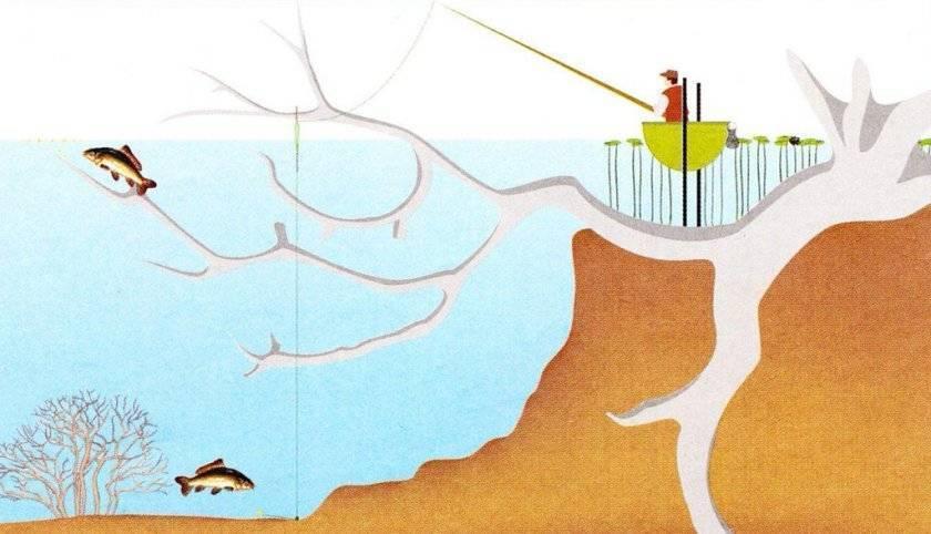Ловля сазана на фидер - правильная оснастка, прикормка и видео рыбалки