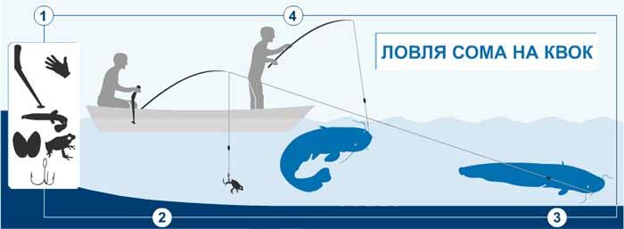 Ловля сома на дону: рыбные места и базы