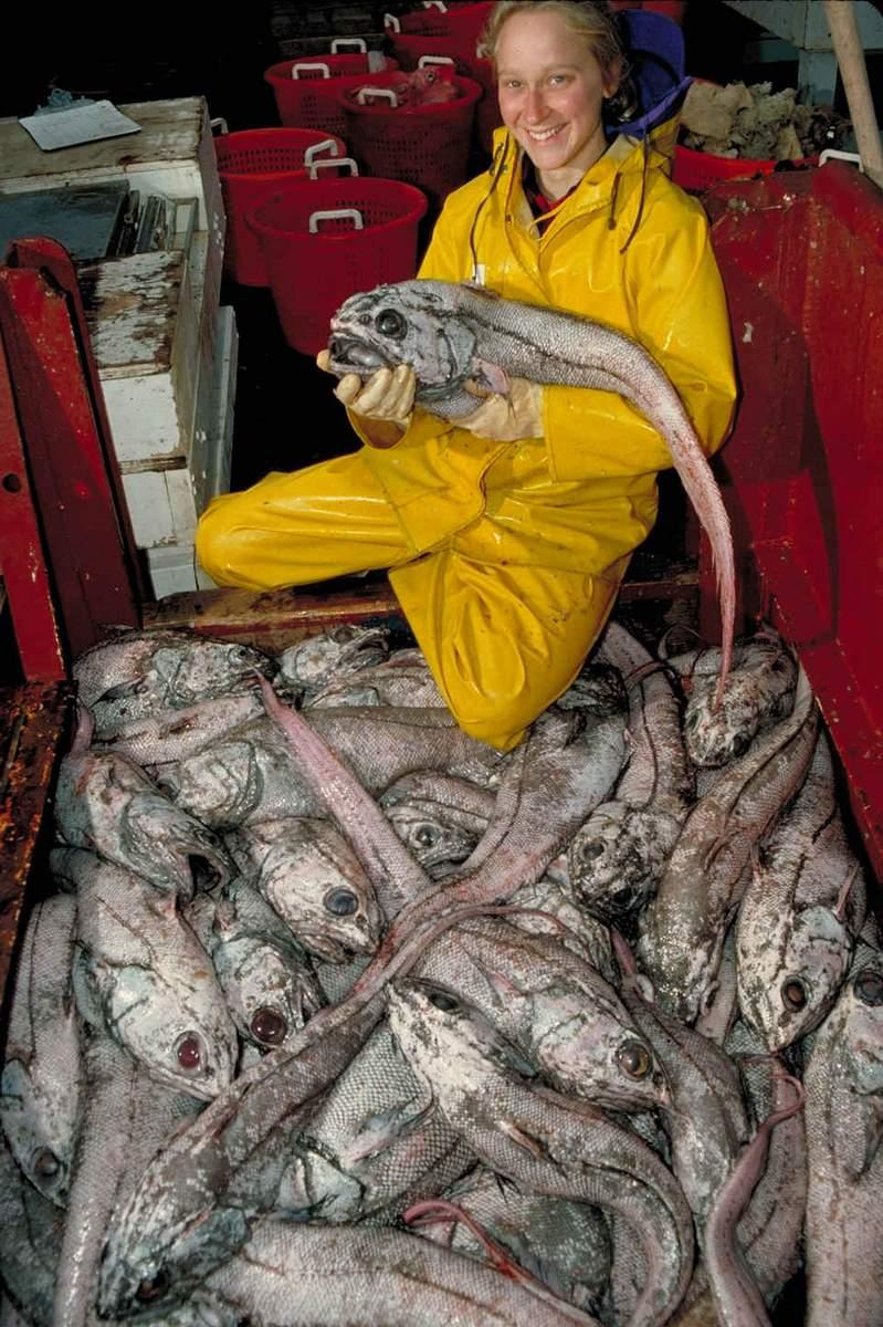 Рыба макрурус - среда обитания, питательная ценность, польза и вред