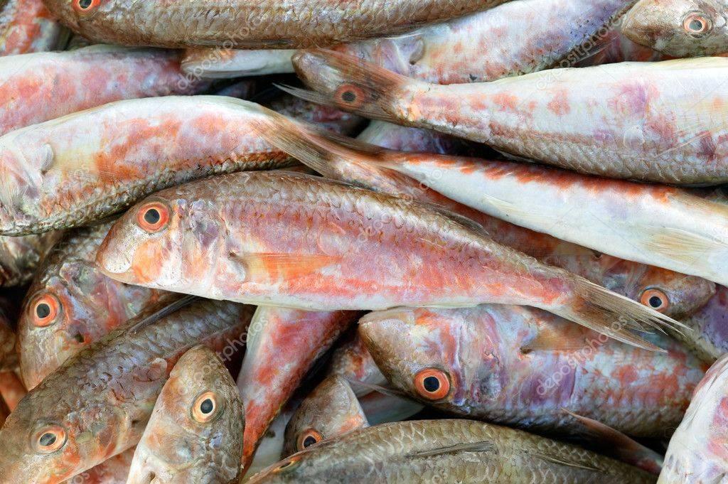 Барабулька: что за рыба, где водится, описание, фото, польза