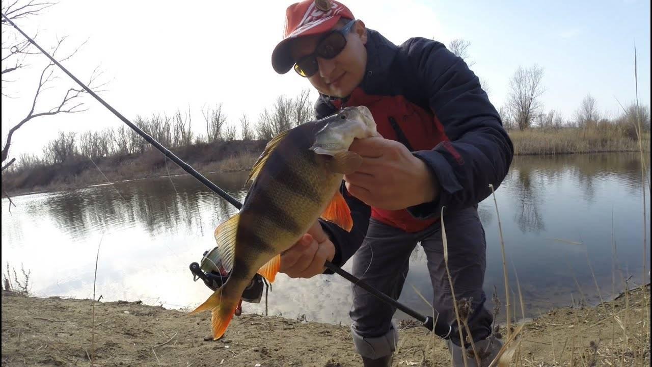 Окунь на озерах и реках - тактика и техника ловли окуня