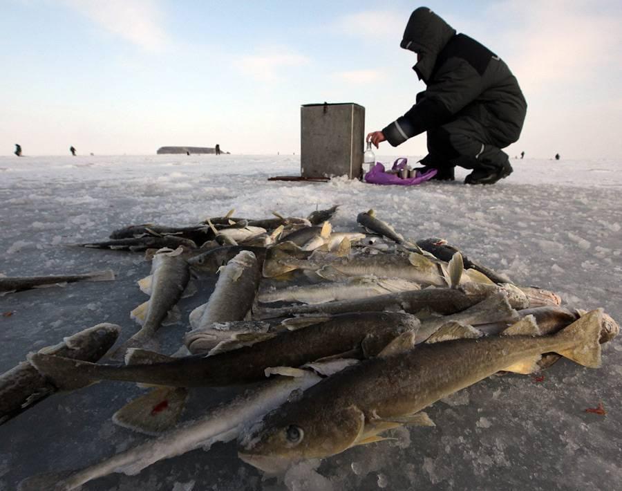 Рыбалка в архангельской области: выбор маршрута, места стоянок, лучшие озера, хорошая рыбалка и отзывы рыбаков