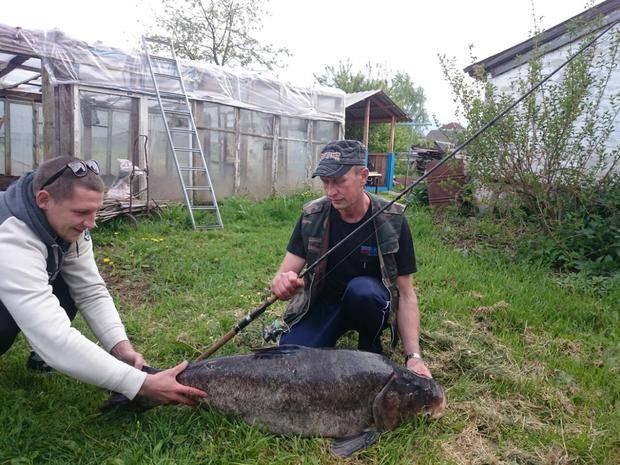 Отчет о рыбалке на толстолобика в брестской области