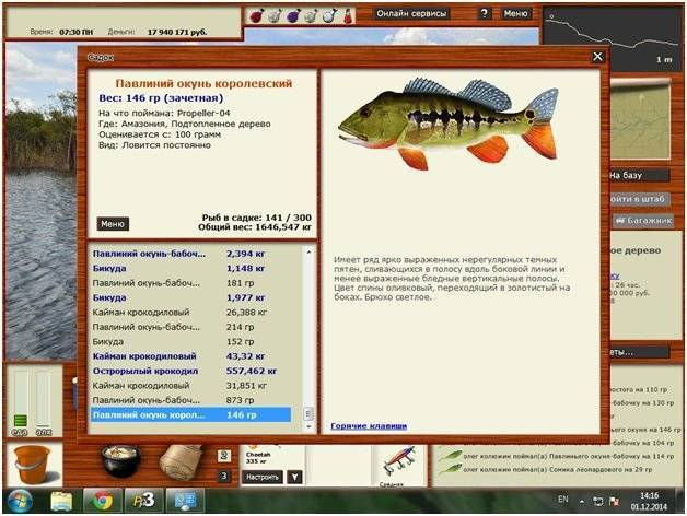 Окунь: описание рыбы, условия обитания, образ жизни, виды, ловля и разведение