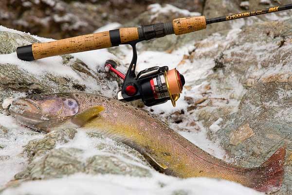 Правильный спиннинг для ловли форели — залог удачной рыбалки