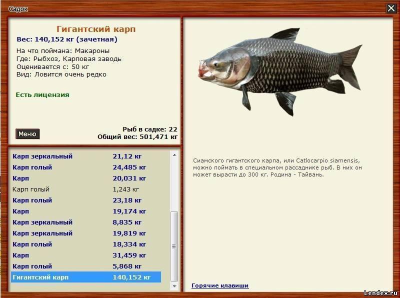 Карп: что за рыба, калорийность и рецепты