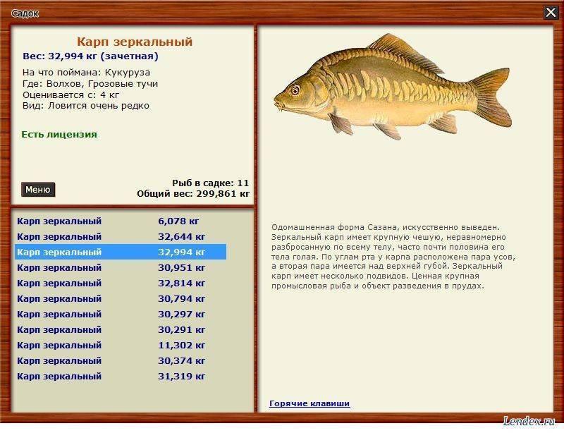 Рыба карп польза и вред, состав калорийность