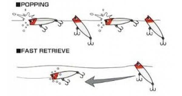 Ловля на поппер окуня и щуки ~ особенности рыбалки на поппер