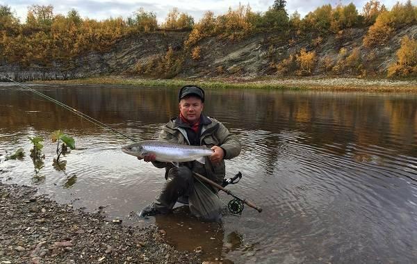 12 лучших рыболовных мест в архангельской области. платные и бесплатные | животный мир