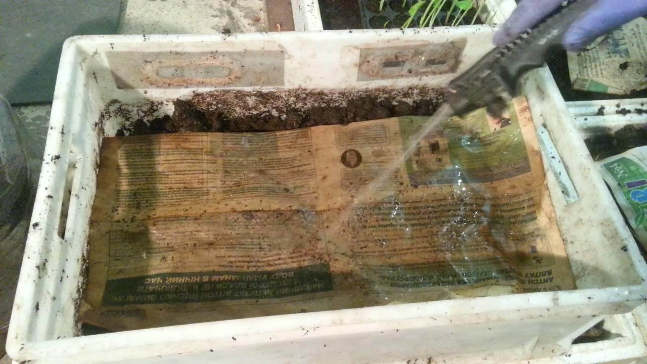 Как развести в домашних условиях червей для рыбалки: подходящие виды и уход за ними