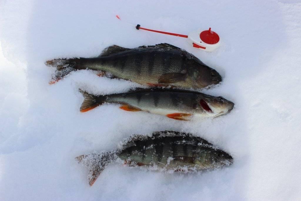 Рыбалка в томске — особенности, какая рыба водится, лучшие места для ловли