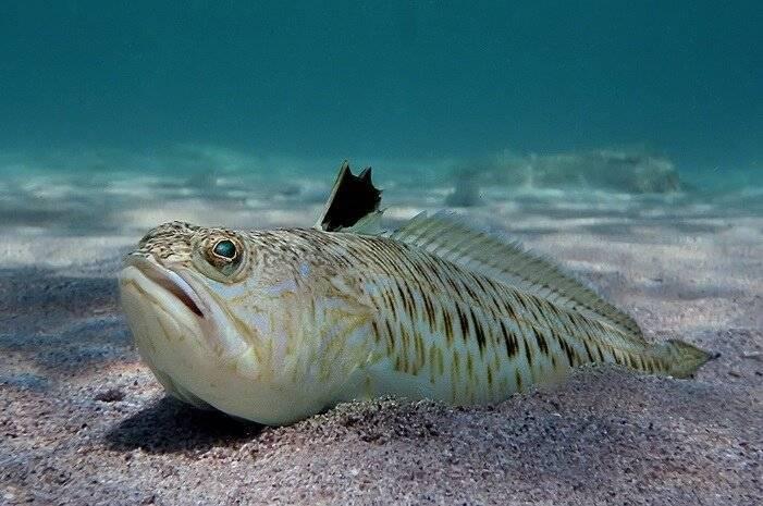 Самые опасные морские обитатели – список, описание, фото и видео  - «как и почему»