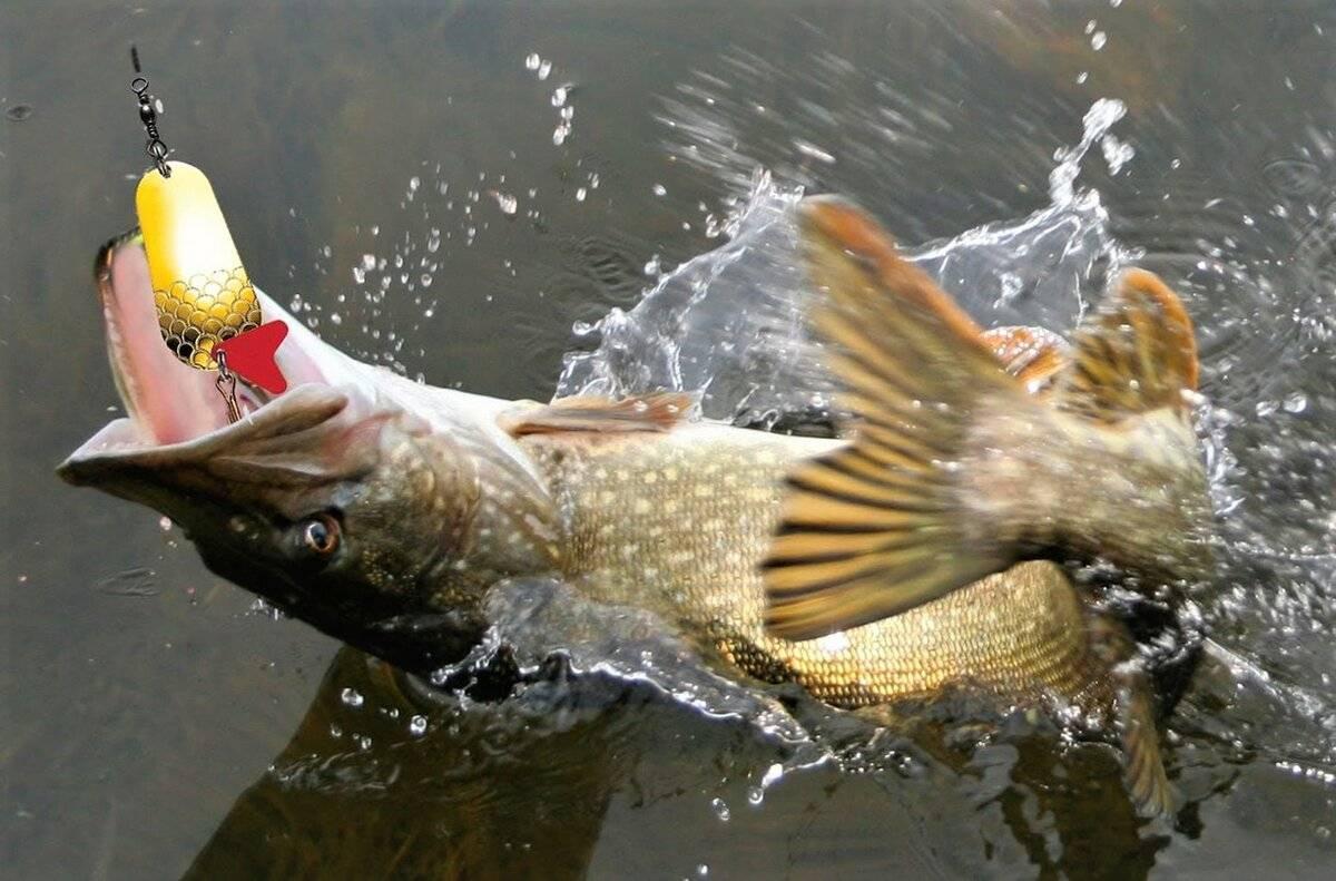 Твистеры на щуку – топ лучших приманок, техника и особенности ловли хищницы