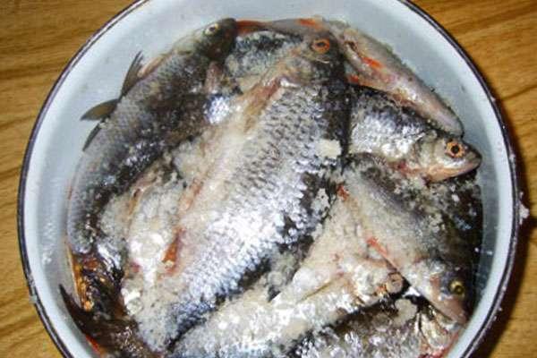 Как правильно сушить рыбу в домашних условиях, делать таранку?